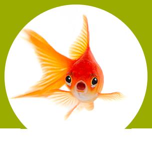 Ketchup, storia del pesce